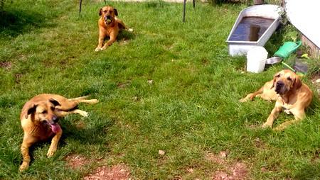 Alle drei im Garten