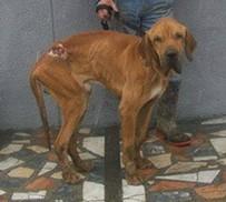 Jambo Fundhund